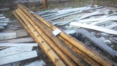 bamboo in CF yard